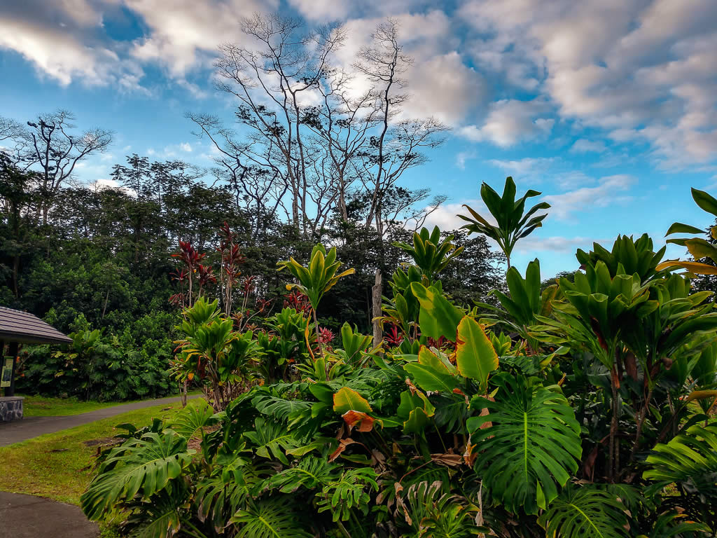 Big Island Hawaii 20190125 074413930 HDR