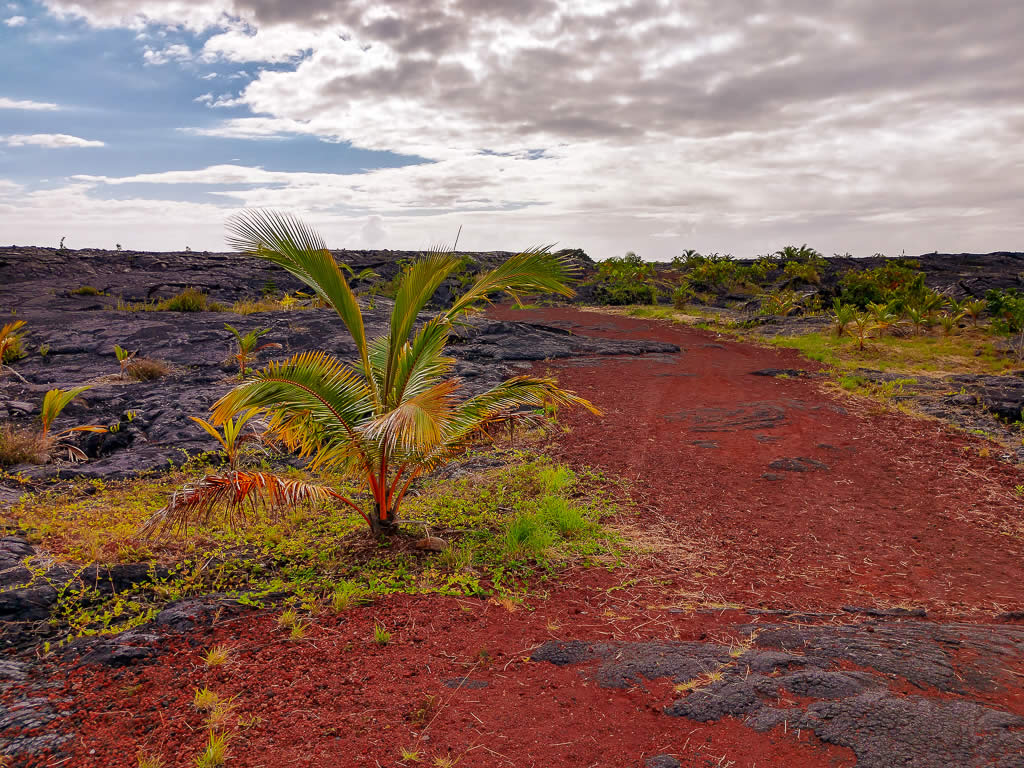 Big Island Hawaii 20190125 094500003 HDR