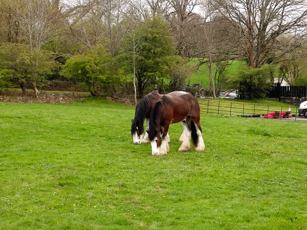 Wild Atlantic Way Ireland Killarney Muckross House Horses